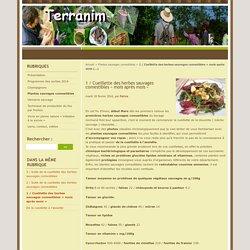 1 / Cueillette des herbes sauvages comestibles « mois après mois »