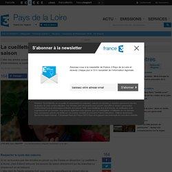 FRANCE 3 PAYS DE LA LOIRE 19/08/14 La cueillette à la ferme plus qu'un succès de saison.