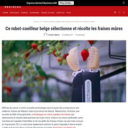 Ce robot-cueilleur belge sélectionne et récolte les fraises mûres