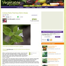 Culinary Herbs That Grow Well In Shade