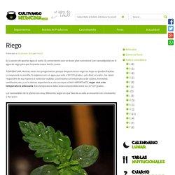 Riego - Como cultivar marihuana y cannabis cultura