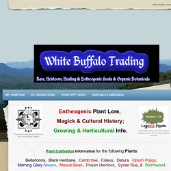 Plant Lore & Cultivation Info -  White Buffalo Trading&nbsp