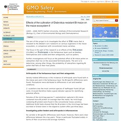 GMO SAFETY 26/11/08 Effects of the cultivation of Diabrotica-resistant Bt maize on the maize ecosystem II