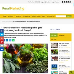 How cultivation of medicinal plants gets boost along banks of Ganga?