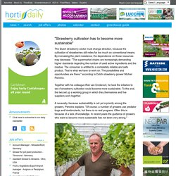 "HORTIDAILY 19/03/18 ""Strawberry cultivation has to become more sustainable"""