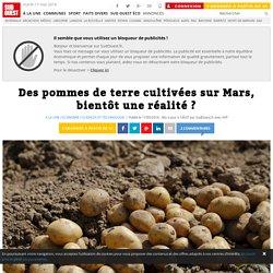 Des pommes de terre cultivées sur Mars, bientôt une réalité ?