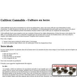 Cultiver cannabis en terre