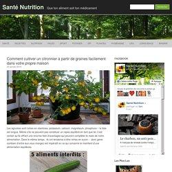 Comment cultiver un citronnier à partir de graines facilement dans votre propre maison