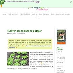 Cultiver des endives au potager