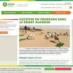 Cultiver du fourrage dans le désert algérien