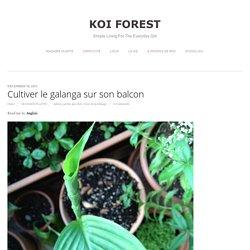 Cultiver le galanga sur son balcon - koi forest