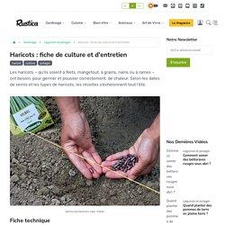 Comment cultiver les haricots selon leurs variétés