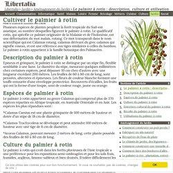 Cultiver le palmier à rotin