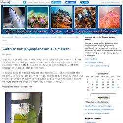 Cultiver son phytoplancton à la maison - Animaux du récif... Trop, c'est pas assez!