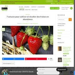 7 astuces pour cultiver et récolter des fraises en abondance