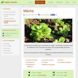 Semer, cultiver et récolter au potager