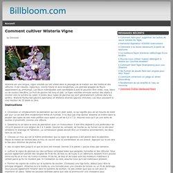 Comment cultiver Wisteria Vigne - billbloom.com