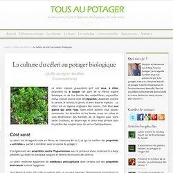 Cultivez le céleri dans votre potager bio
