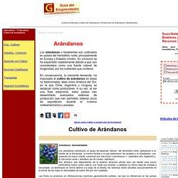 Cultivo de Arandanos. Guia para cultivar arandanos