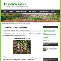 Culture de l'ail au potager bio - Un potager nature