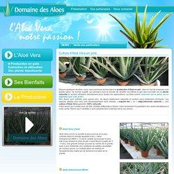 Culture d'Aloe Vera en pots