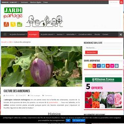 Culture des aubergines: fiche complète