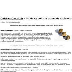 Misterd pearltrees for Conseil culture cannabis exterieur
