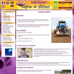 La culture du safran en France - Comment cultiver le safran