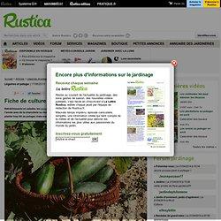 Fiche de culture : concombre et cornichon