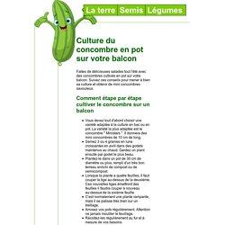 Culture du concombre en pot sur votre balcon