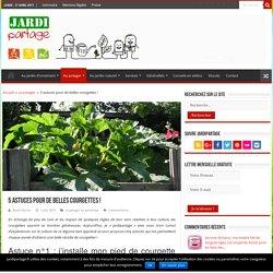 Culture courgette: 5 astuces pour de belles courgettes !