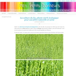 La culture du lin, plante 100% écologique pour une fibre naturelle et saine