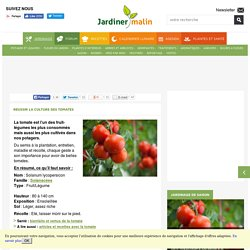 Tomate : semis, culture, entretien, recolte
