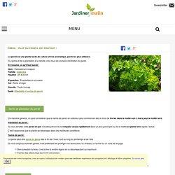 Persil : semis, culture, entretien, recolte