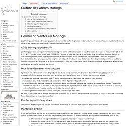 Culture des arbres Moringa