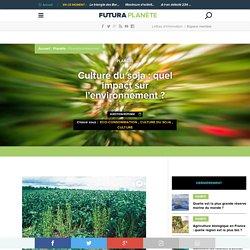 Culture du soja : quel impact sur l'environnement ?