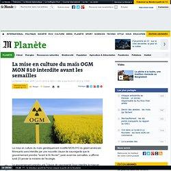 La mise en culture du maïs OGM MON 810 interdite avant les semailles