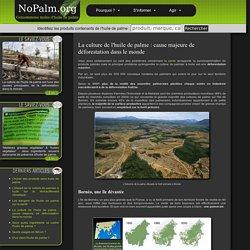 La culture de l'huile de palme : cause majeure de déforestation dans le monde