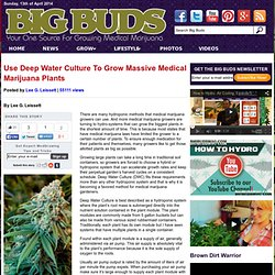 Use Deep Water Culture To Grow Massive Medical Marijuana Plants