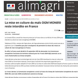 MAAF 15/04/16 La mise en culture du maïs OGM MON810 reste interdite en France