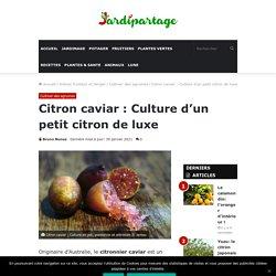 Citron caviar : Culture en pot, plantation et entretien