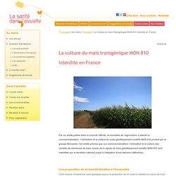 La culture du maïs transgénique MON 810 interdite en France