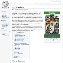Animal culture