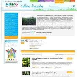 Cultures tropicales
