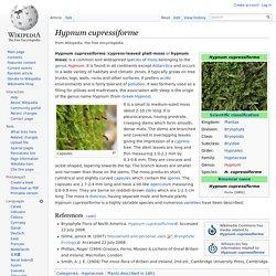 Hypnum cupressiforme