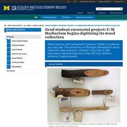 Grad student curatorial project: U-M Herbarium begins digitizing its wood collection
