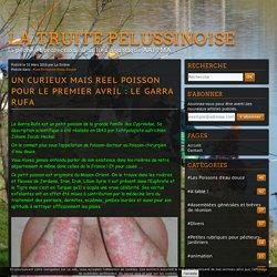 UN CURIEUX MAIS REEL POISSON POUR LE PREMIER AVRIL : LE GARRA RUFA - LA TRUITE PELUSSINOISE