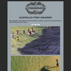 Acapulco Fish Swarm