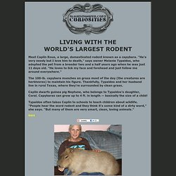 Curiosities: Living With the Worlds Largest Rodent