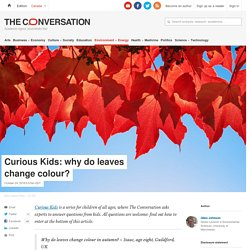 Curious Kids: why do leaves change colour?